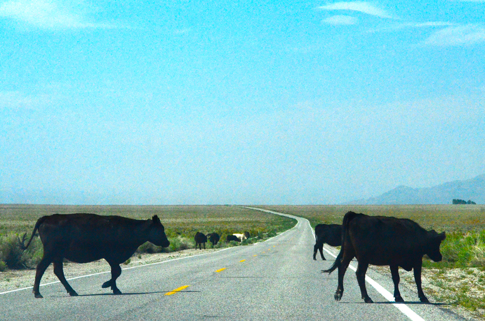 Who says roads aren't crowded in the desert?